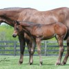 Mare Magic: Preparation key to success in the breeding shed