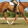 Does Size Really Matter in the Hunter Under Saddle pen?