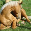 Colic: Strikes fear into the heart