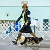 Cheree Kirkbride: She traded her spurs for a leash