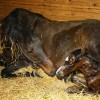 Some foaling 'life hacks'