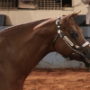 Lip Chains: AQHA's ban starting in 2016 sparks debate