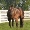 AQHA stallion breeding report forms must be submitted by November 30