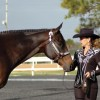 Brandy Halladay's passion for horses withstands challenge