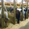 Prepare your mares for breeding season