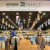 Qualify for the 2016 AQHA Select World By May 31