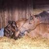 Impact on Neonatal Foals