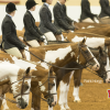 Entries up over 5% at 2016 APHA Youth World Show