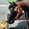 Share your equine-related Pokémon pictures and win prizes