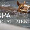 Equine Spa Treatments