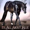 AQHA Hunter Under Saddle Sire Its All About Blue Passes