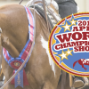 APHA Releases Schedule for the 2016 World Show