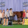Entry Deadline Extended for the Farnam APHA Breeders' Trust Select Yearling Sale