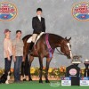 Top Amateur titles awarded at 2016 APHA World Championship Show