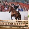 2016 Quarter Horse Congress names All-Around Champions