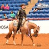 Donate a breeding to the 2017 ApHC Stallion Service Auction