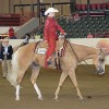 PHBA expands Golden Horse awards