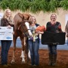 AQHA names World Show All-Around Amateur winners