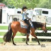 Lexus Made Lady named 2016 NSBA Horse of the Year