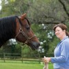 A Closer Look at Equine Activity Liability Laws