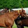 Golden Oldies: Breeders share advice on managing older mares