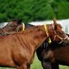 Golden Oldies: Breeders share advice on managing older mares
