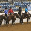 $25,000 up for grabs in Hylton Maiden 3 & Over Western Pleasure