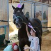 Virginia Horse Park hosts joint ApHC and APHA show