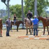 Sun & Surf Circuit Features AQHA and NSBA Classes