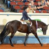 2018 AQHA Youth World to offer 13 & Under classes