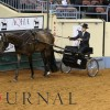 Recently approved recommendations from the AQHA Show Committee
