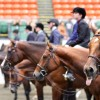 AQHA Top 10 Show Region 6 Super 6 is underway