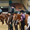 NSBA European Championship is the highlight of the show season