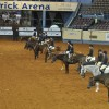New World Champions Crowned at the AQHYA World Show