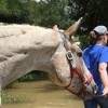 AAEP Accepting Donations to Assist Horses Affected by Hurricane