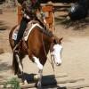 August Internet Horse Auctions