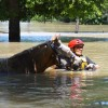 Support horses in need through the Texas Equine Veterinary Association