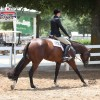 Julie Majernik spends a lot of time getting to know her horses