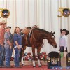 Preview the Congress Super Sale entries on Friday