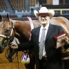 Halter qualification options adjusted by AQHA for next year