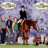 January Internet Horse Auctions