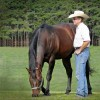 Savvy stallion breeding managers focus on customer service
