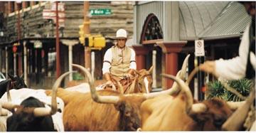 herd-drovers4-