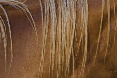 Horse's Mane Closeup
