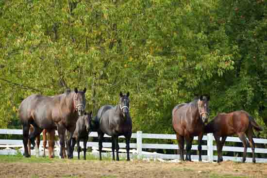 Pine View Mares