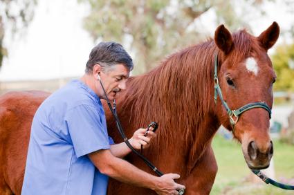 Equine Vet Examining Horse
