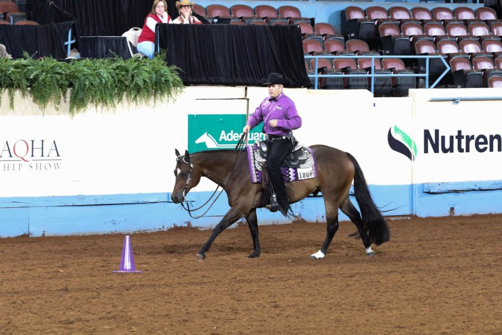 AQHA High-point Standings