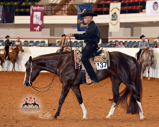Appaloosa Association transitions from National Show to